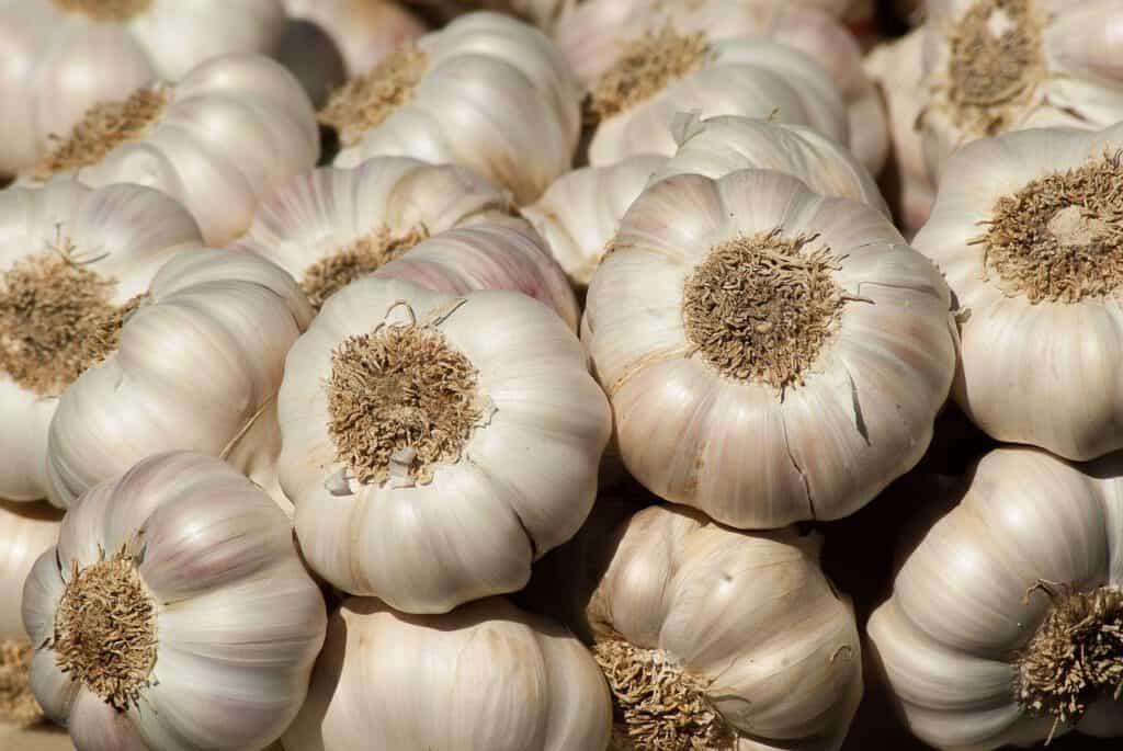 garlic sauce ingredient