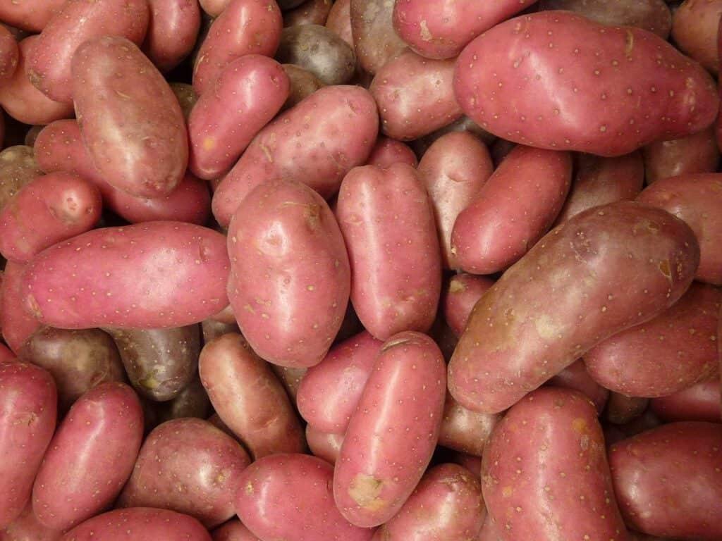 Instant Pot Red Potatoes recipe