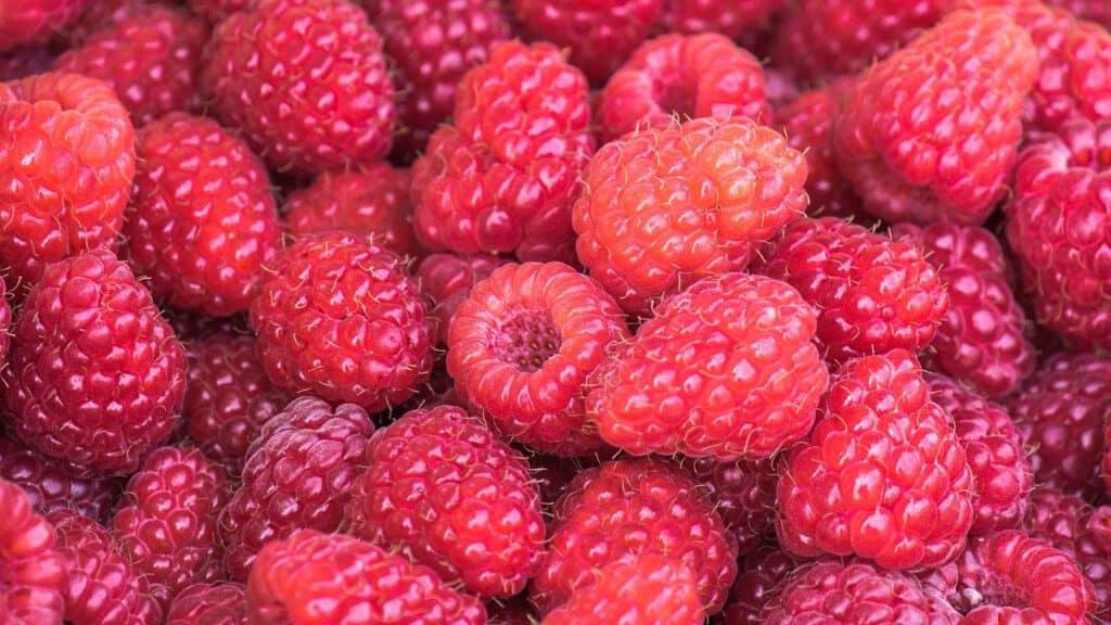 raspberry yogurt smoothie recipe