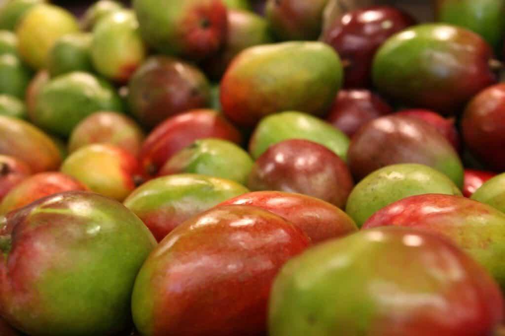 mango daiquiri recipe